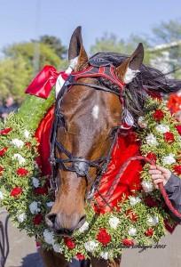 Een krans voor de verdiende winnaar Robert Bi (foto Ankie Bijkerk)