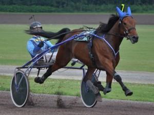De paarden van Dicky Hof toonden na Groningen hun vorm ook in Emmeloord. (foto Geert Koops)